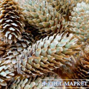 Фото Натуральные материалы - Эко, Шишки для декора Шишка еловая натуральная