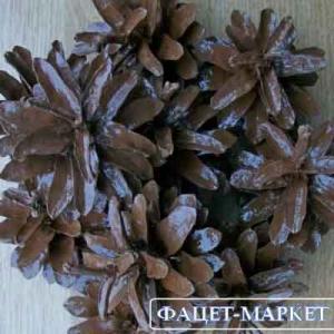 Фото Натуральные материалы - Эко, Шишки для декора Шишка сосновая цвет Орех