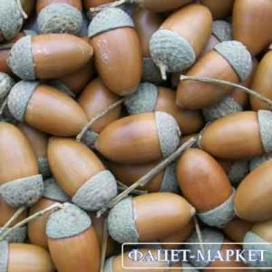 Фото Натуральные материалы - Эко, Желуди для декора Жёлуди декоративные лесные