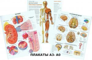 Фото 6.. Стенды и плакаты для колледжей и ВУЗов, Медицина и здравоохранение Плакаты
