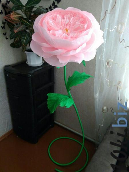 Пионовидная роза купить в Беларуси - Подарки и сувениры