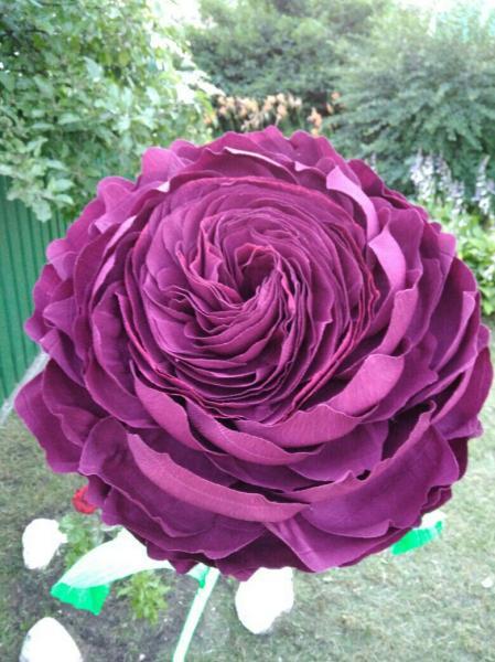 Пионовидная роза (violet)