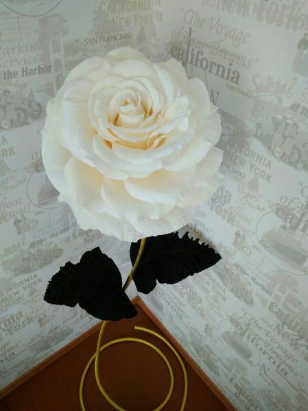 Роза белая (Gold)