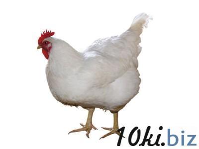 Комбикорм куры-несушки с 18 недель, в течение продуктивного периода (СП 17%)