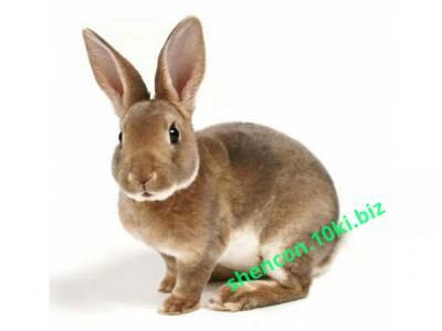 Фото КОМБИКОРМ - ШЕНКОН, Комбикорм для кроликов Комбикорм для кроликов с сенной мукой