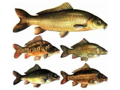 Комбикорм для промысловой рыбы
