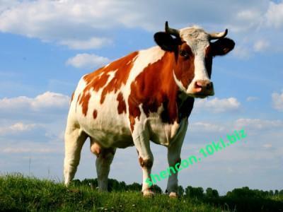 Фото ПРЕМИКС - ШЕНКОН, Премиксы для коров Премикс