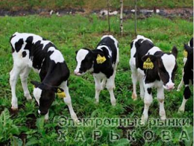 """Энергетический Премикс """"Шенмикс Энерджи Про"""" (для высокопродуктивных коров) - Премиксы на рынке Барабашова"""
