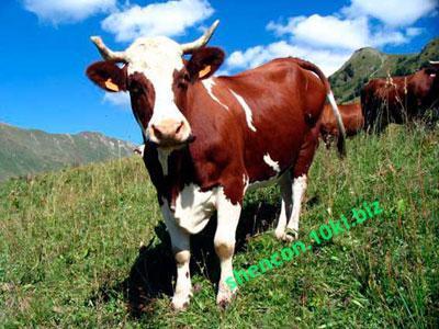 Фото ПРЕМИКС - ШЕНКОН, Премиксы для коров Энергетический Премикс