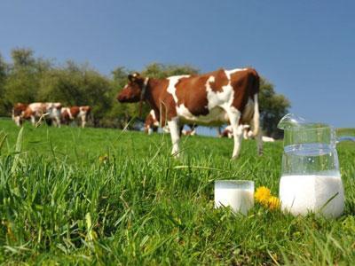 "ЗЦМ ""Теленок.PREMIUM"" (с 5 дня 80% молока) Сухое Молоко для телят, поросят"