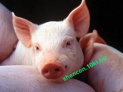 Фото Премиксы, Премиксы для свиней Премикс