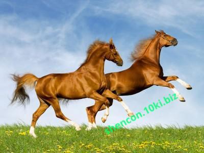 Фото ПРЕМИКС - ШЕНКОН, Премиксы для лошадей Премикс