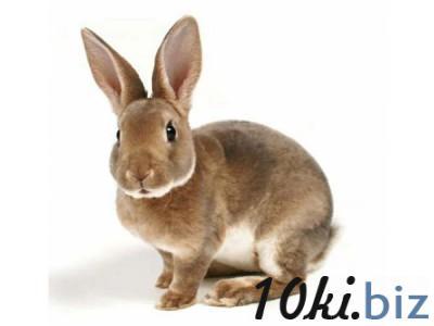 """Премикс """"ШенМикс Раббит ПРО"""" 2,5% кролики с пробитиком Премиксы на Электронном рынке Украины"""