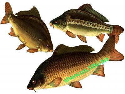 Фото ПРЕМИКС - ШЕНКОН, Премиксы для рыбы Премикс
