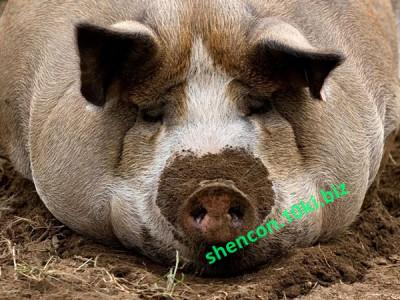 Фото БВМД - ШЕНКОН, БВМД для свиней БВМД