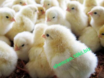 Фото БВМД - ШЕНКОН, БВМД для птицы БМВД