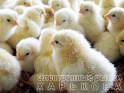 """БМВД """"Шен Чикен Леер"""" 5% цыплята - Белково-минеральные витаминные добавки на рынке Барабашова"""