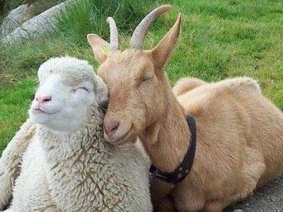 """БМВД """"Шени шипы"""" 10% овцы, козы"""