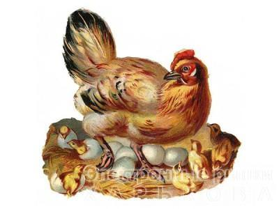 БМВД «Шен Леер» 5% несушки - Белково-минеральные витаминные добавки на рынке Барабашова