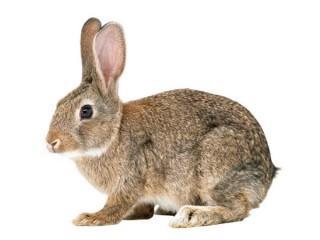 Комбикорм для кроликов с сенной мукой (10 кг)