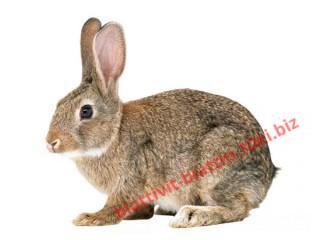 Фото КОМБИКОРМА Комбикорм для кроликов с сенной мукой (10 кг)