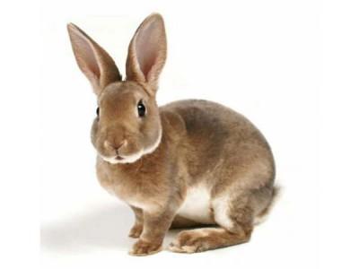 Комбикорм для кроликов с сенной мукой (25 кг)