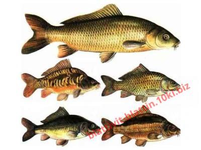 Фото ПРЕМИКСЫ Премикс «ШенМикс Фиш» 2% промысловая рыба