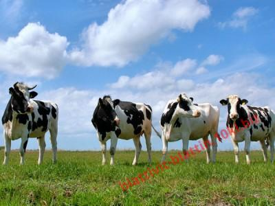 Фото ПРЕМИКСЫ Премикс «Шенмикс Ков Драй ІІ» сухостойные коровы