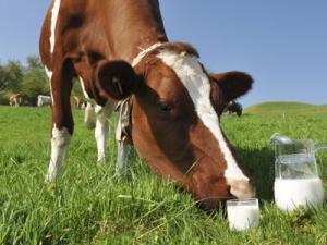 ЗОМ «Супермилк» Сухое Молоко для телят, поросят