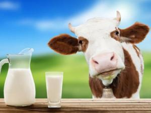 ЗЦМ «Дейри.Кальф» Сухое Молоко для телят, поросят
