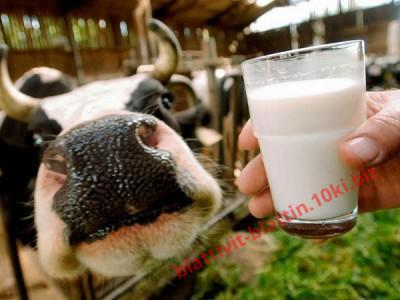 Фото ЗЦМ - СУХОЕ МОЛОКО ЗЦМ «Теленок.JUNIOR +» Сухое Молоко для телят, поросят