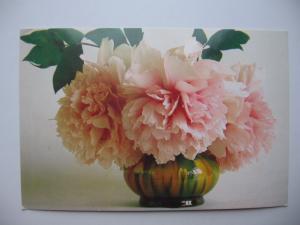 Фото Почтовые открытки (карточки), открытки, Цветы Пион