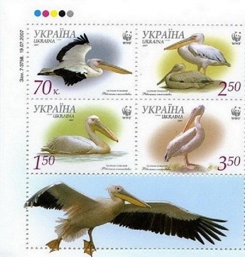 2007 № 855А-858А сцепка почтовых марок Фауна Пеликан розовый (Pelekanus onocrotalus)