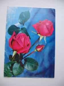 Фото Почтовые открытки (карточки), открытки, Цветы Розы фото Б, Круцко Редактор А. Лучинина 1978