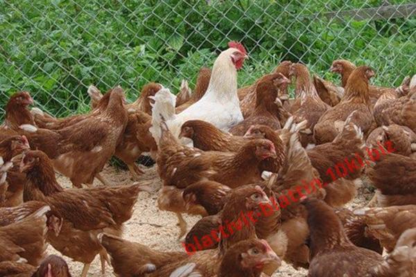 Фото КРАМАР - для Свиней Скота Птицы Кролей, Для Птиц, Для Несушек, Комбикорм для несушек ПК 3-4 Рост Несушка