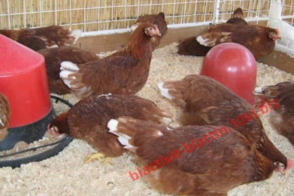 Фото КРАМАР - для Свиней Скота Птицы Кролей, Для Птиц, Для Несушек, Комбикорм для несушек ПК 1-18 Комбикорм Несушка