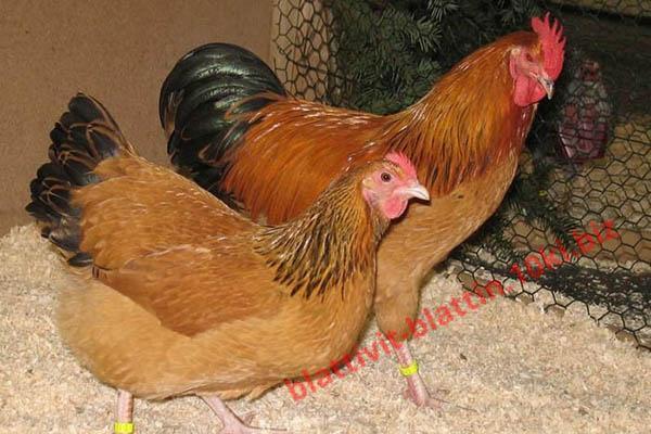 Фото КРАМАР - для Свиней Скота Птицы Кролей, Для Птиц, Для Несушек, БМВД для несушек (белково-витаминно-минеральные добавки) ПК 1-2 БМВД (20%) Несушка