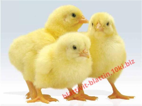 Фото КРАМАР - для Свиней Скота Птицы Кролей, Для Птиц, Для Бройлеров, Комбикорм для Бройлеров ПК 5-1 Предстарт Бройлер от 1 до 10 дней