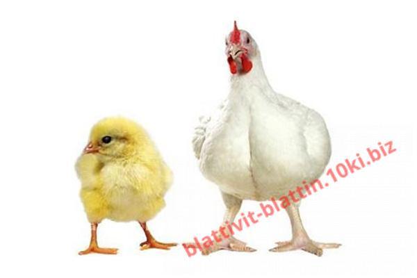 Фото КРАМАР - для Свиней Скота Птицы Кролей, Для Птиц, Для Бройлеров, БМВД для Бройлеров (белково-витаминно-минеральные добавки) ПК 5-4 БМВД (40%) Старт бройлер 1 - 25 дней