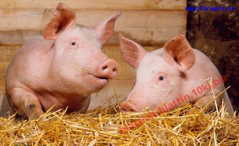 Фото КРАМАР - для Свиней Скота Птицы Кролей, Для Свиней, БМВД для Свиней (белково-витаминно-минеральные добавки) СК-21 БМВД (15%) Поросята Рост 91 - 140 дней