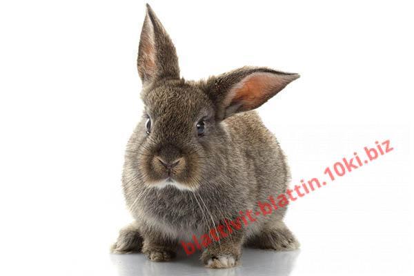 Фото КРАМАР - для Свиней Скота Птицы Кролей, Для кролей КК 92-1 Для взрослых Кролей (с травяной мукой)