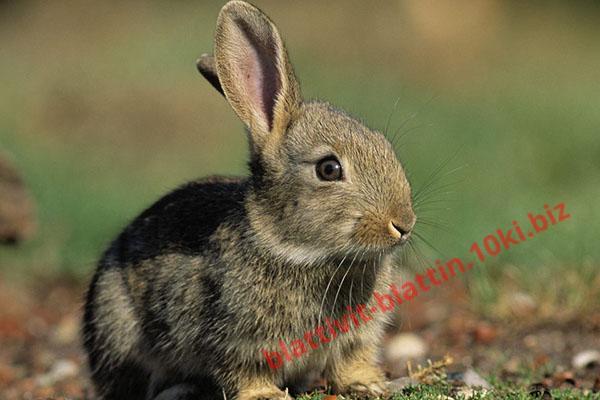 Фото КРАМАР - для Свиней Скота Птицы Кролей, Для кролей КК 94-1 Для молодых кролей до 150 дней (с травяной мукой)