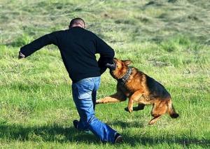 Фото СТРАХОВАНИЕ ЖИВОТНЫХ Страхование гражданской ответственности владельцев животных