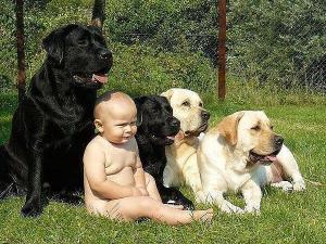 Фото СТРАХОВАНИЕ ЖИВОТНЫХ Страхование породистых животных