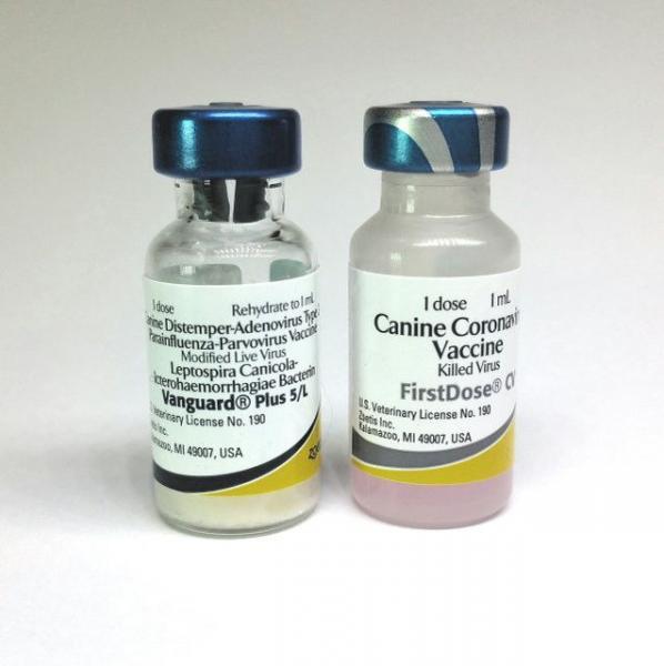 Вакцина Вангард Плюс 5CV-L №25 с коронавирусом zoeti