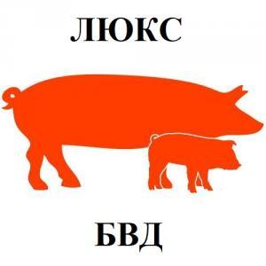 БВД КМ СВ-10% для свиней (от 65 кг) Люкс