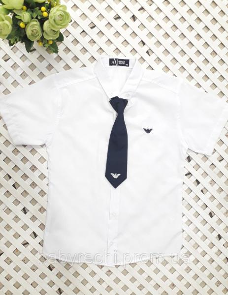 Рубашка в комплекте с галстуком мальчику 128-152 см 146