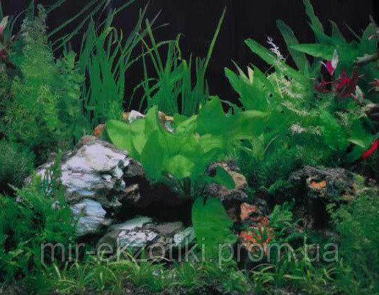 Фон для аквариума односторонний 30см арт.9003