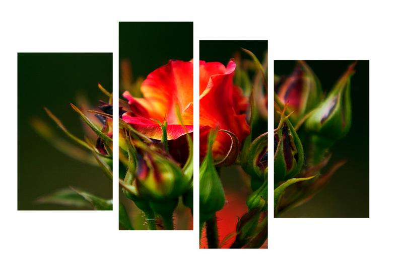 Модульная картина Декор Карпаты 110х70 см Роза (M4-c193)