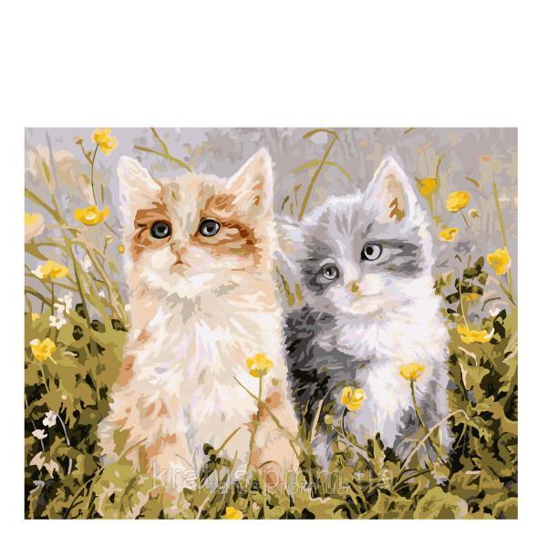"KG 294 ""Два котенка в траве"" Роспись по номерам на холсте 40х50см"